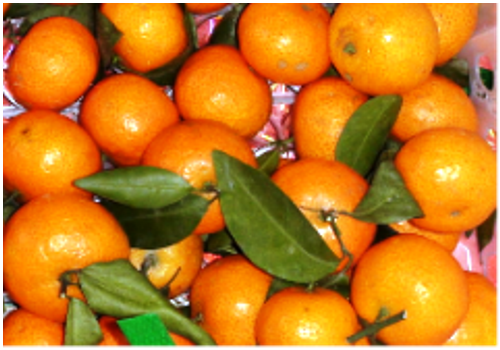 Introduction of Chinese Citrus/Orange Industry