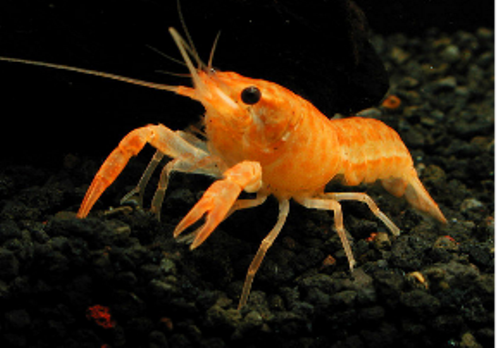 Introduction of Chinese Shrimp Farming Industry