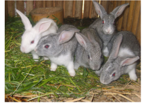 Mengyin Long Hair Rabbit Breeding Base--Shandong